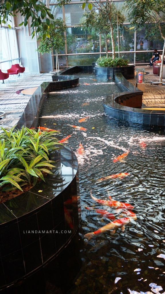 Koi Pond Changi Airport